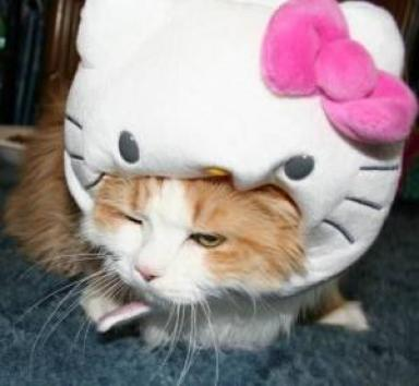 hello-kitty-cathood-1thumbnail.jpg